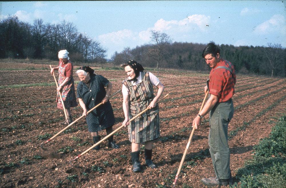 Die Familienmitglieder bei der  Arbeit auf dem Acker
