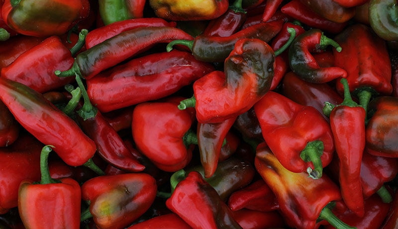 Rote Paprika aus dem Freiland